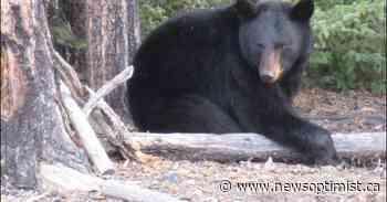 Edam woman was victim of fatal bear attack north of Buffalo Narrows - The Battlefords News-Optimist