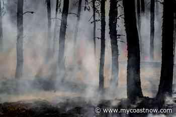 The Port Mellon fire is being held - My Coast Now - mycoastnow.com
