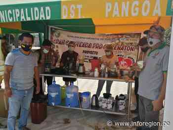 Junín: Revaloran producción cafetera en Pangoa - INFOREGION