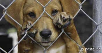 Animais em perigo vão ser resgatados por unidade em Boliqueime - Postal do Algarve