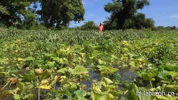 Campesinos perdieron cultivos por inundaciones en San Bernardo del Viento - LA RAZÓN.CO