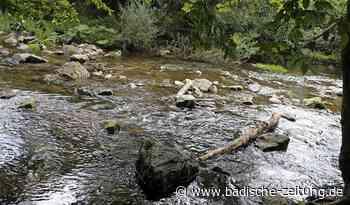 Ökologische Hilfe für die Elz - Waldkirch - Badische Zeitung