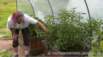 'Rockin' Veggies' in Smooth Rock Falls is producing food for northern food banks - CTV Toronto