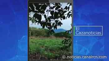 El Cazanoticias: tala indiscriminada de árboles en Puerto Salgar, Cundinamarca - Noticias RCN
