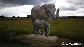 Schwalmstadt: Safari in den Schwalmwiesen - HIT RADIO FFH