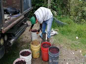 Incentivos agropecuarios en Ragonvalia - Canal TRO
