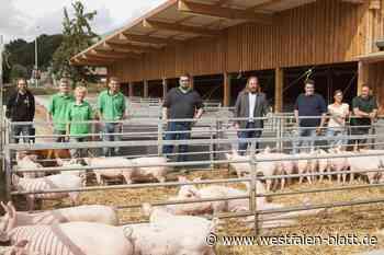 Ein Besuch bei glücklichen Schweinen - Westfalen-Blatt