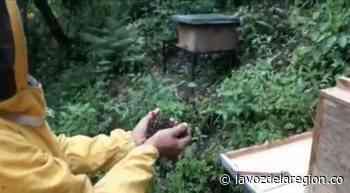 Denuncian grave mortandad de abejas en vereda de Iquira - Noticias