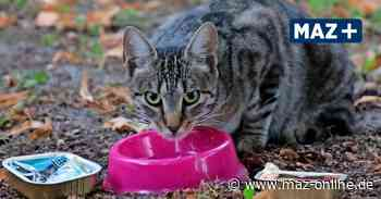 Pritzwalk: Freilebende Katzen werden zum Problem - Märkische Allgemeine Zeitung
