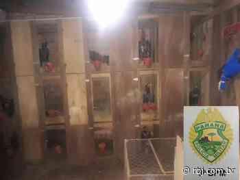 Polícia Militar fecha rinha de galo em Mangueirinha - RBJ