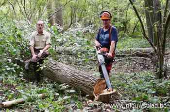 """Bos verliest meer dan 417 bomen, maar daar komen 500 nieuwe exemplaren voor in de plaats: """"We zetten in op verjonging"""""""