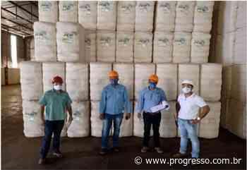 Mato Grosso do Sul terá primeira algodoeira certificada pelo ABR-UBA - O Progresso - Dourados