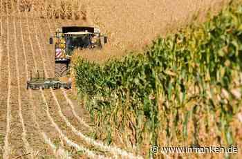 Prichsenstadt: Maiskolben mit Nägeln durchbohrt - Landwirt kann Maschine rechtzeitig stoppen - inFranken.de