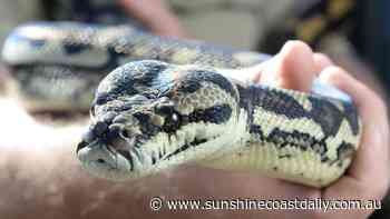 Snake bite puts Nambour woman, 70, in hospital - Sunshine Coast Daily