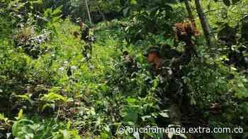 En zona rural de Otanche, Boyacá oficiales del Ejército encontraron más cultivos ilícitos - Extra Bucaramanga