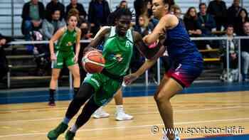 Basket – NF2 – Que visent Le Chesnay/Versailles, le Stade Français, Franconville et le Paris Basket Avenir ? - SportsCo IDF