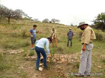 Plantan 80 mil árboles y magueyes en San Miguel de Allende - Milenio