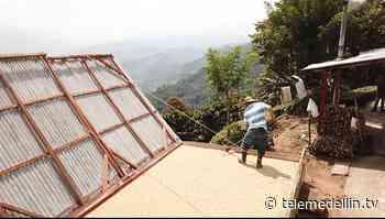 Cerca de 650 recolectores de café se han inscrito en Fredonia - Telemedellín