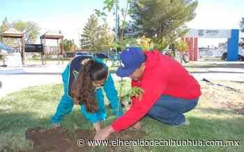 Entregan más de 2,500 árboles para reforestar la ciudad de Delicias - El Heraldo de Chihuahua