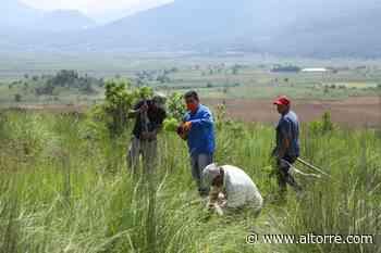 Reforestan El Ánima Sola en Paracho, con 2 mil 100 pinos - Altorre