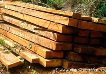 """Decomisan madera """"Cedro"""" y """" Mohena"""" en la zona rural de Soritor - Diario Voces"""