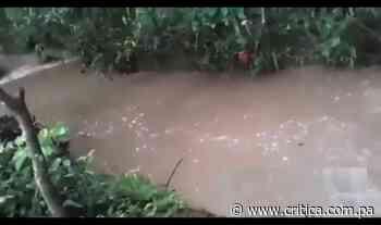 Denuncia: Peces mueren tras contaminación en quebrada Cabuya en Ocú (Video) - Crítica