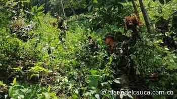 En zona rural de Otanche, Boyacá oficiales del Ejército encontraron más cultivos ilícitos - Diario del Cauca