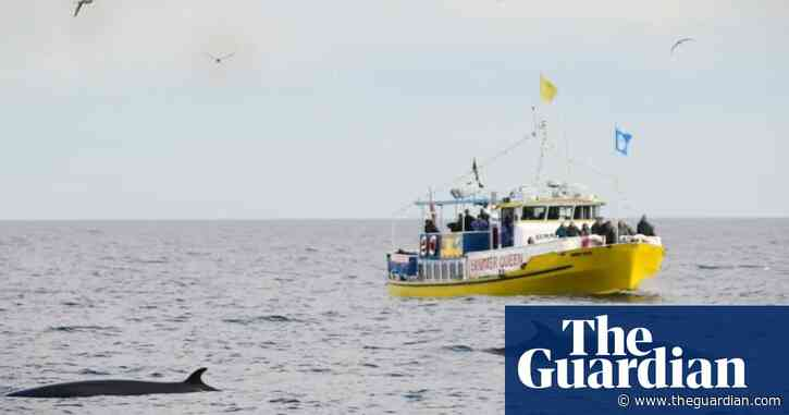 Whale-watching boom attracts new day trippers to Yorkshire