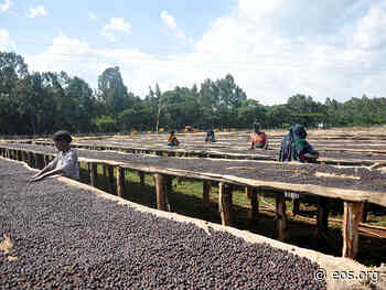 Ethiopia's Coffee-Growing Areas May Be Headed for the Hills - Eos