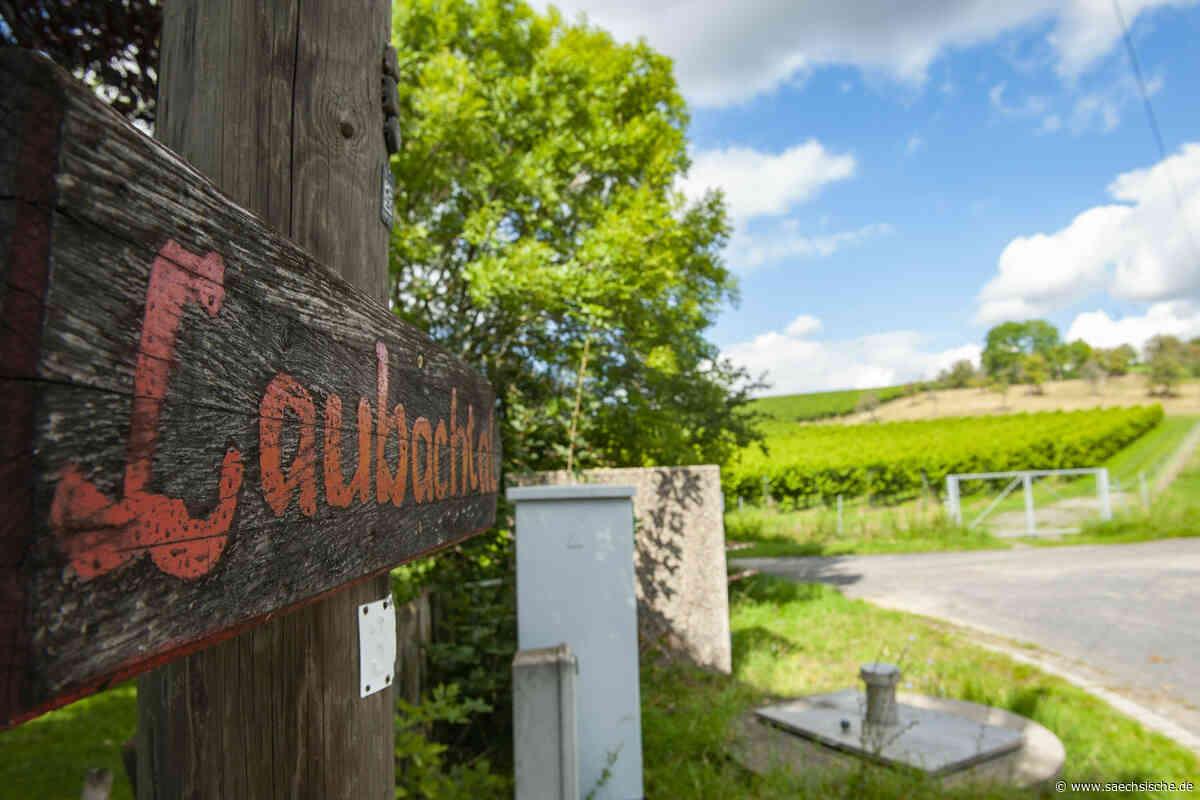 Weinlese in Laubach steht noch aus - Sächsische Zeitung