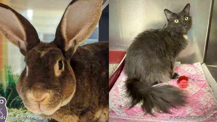 Furry Tails: Bun Affleck And Stormy Are Waiting For Forever Homes