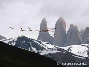 Cuarentena en Puerto Natales y guardaparques contagiados con Covid-19 llevaron a decretar el cierre del Parque Torres del Paine y el Milodón - La Prensa Austral