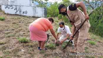 Arborización con especies nativas, hicieron militares en Neiva - Noticias