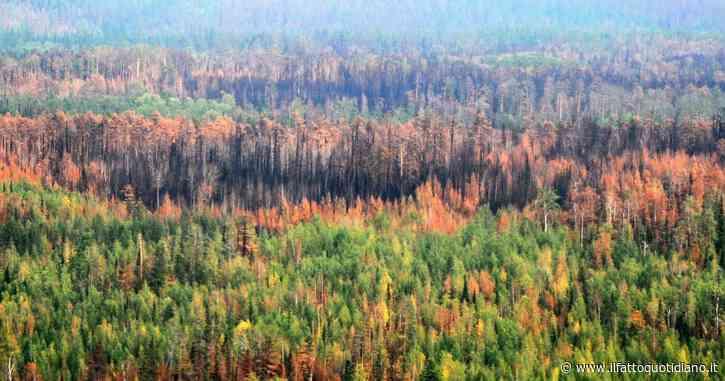 Siberia, gli incendi continuano: va a fuoco ciò che credevamo non potesse neanche scaldarsi