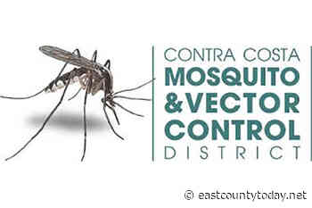 West Nile Virus: Infected Mosquitoes Found in Brentwood and Discovery Bay - EastCountyToday