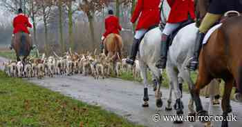 Voice of the Sunday People: Fox-hunting has no place in civilised society