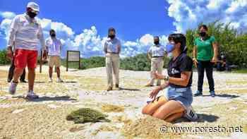 Hoteleros de Isla Mujeres se suman a programa de conservación de la tortuga marina - PorEsto
