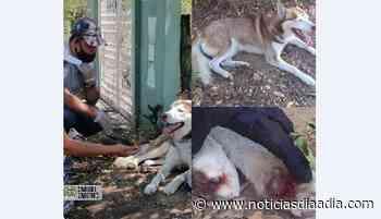 Rescatan mascota víctima de maltrato animal en Tocaima, Cundinamarca - Noticias Día a Día
