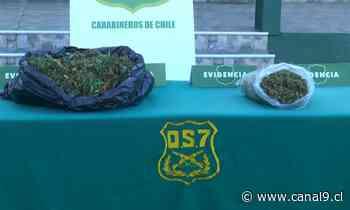 OS7 de Carabineros detuvo a hombre por cultivo de marihuana en Coronel - Canal 9 Bío Bío Televisión