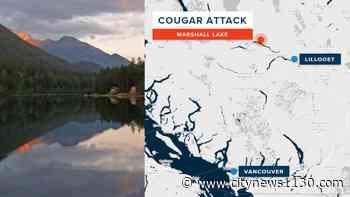 Cougar attacks 10-year-old boy near Lillooet - News 1130