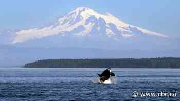 10 years after Salish Sea is named, experts say united front on conservation still distant