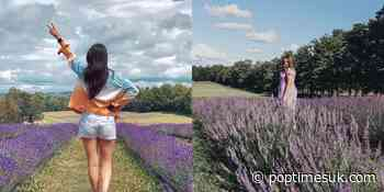Huge fields of lavender will land in Magog very soon! - POP TIMES UK