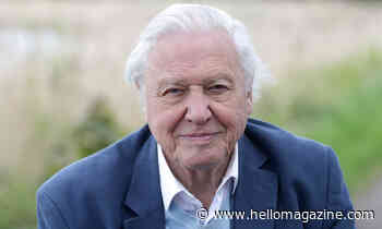 David Attenborough then vs now: take a look back at his early career