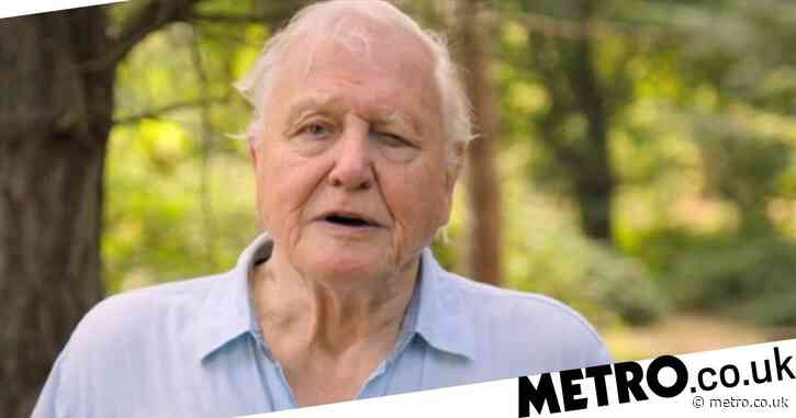 Sir David Attenborough breaks hearts as he says he might not be here to see humanity save the planet