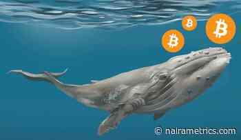 Bitcoin whale transfers 11230 BTC worth $116 million - Nairametrics