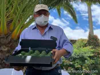 En Pimampiro, Imbabura, con 30 agricultores arranca la primera Escuela de Fruticultura - El Universo