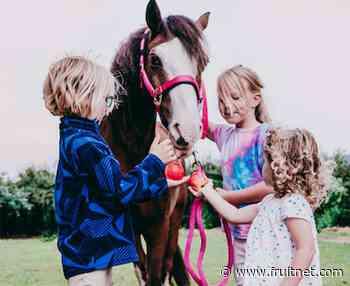 Whoa! Pink Lady donates apples to horses