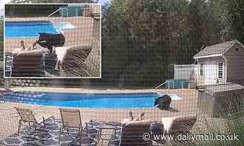 Moment man taking nap by his pool is woken up by bear sniffing his foot and taking a drink of water