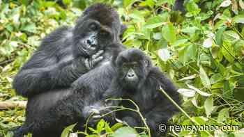 Wildlife in 'catastrophic decline' due to human destruction, scientists warn