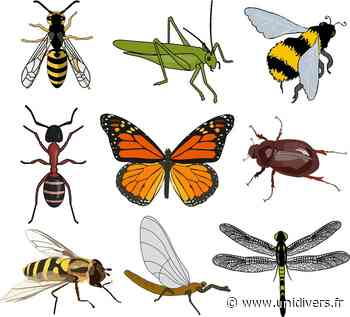 Dessin entomologique Maison de la nature et de l'arbre samedi 12 septembre 2020 - Unidivers
